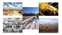 College Park Scholars (SGC) S4S Project - GMOs