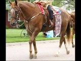 Mii Horses and Mii Families Horses