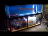 125 Gallon Aquarium With Sump (Moving Bed Filter)