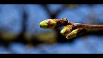 ART|Photography 4K Resolution Slideshow