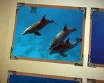 Filmpje over dolfijnen