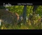 Luchs Nordluchs Eurasischer Luchs Animals Tiere SelMcKenzie Selzer-McKenzie