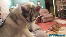 Dremel for Nails? Huskies or Malamutes for Sledding? FAN FRIDAY 142
