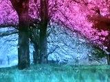 "Hachikō Monogatari/The Tale of Hachiko 1987 Ending (2009 Remake Ending Theme) ""Goodbye"""