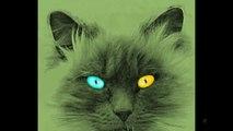 Meow - Miau....süße schwarz-weiße Katze - Cute black and white cat / kitty / kitten !