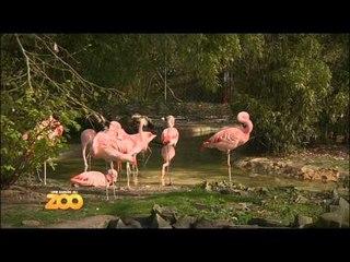Une saison au zoo - Episode 1 (Saison 1)
