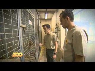 Une saison au zoo - Episode 1 (Saison 2)