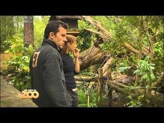 Une saison au zoo - Episode 41 (Saison 1)