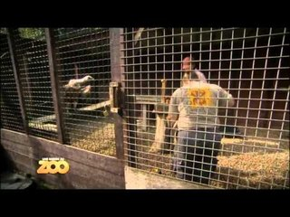 Une saison au zoo - Episode 29 (Saison 2)