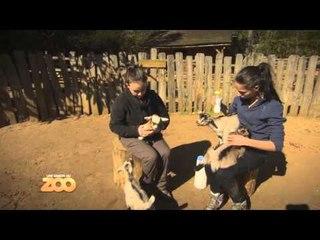Une saison au zoo - Episode 13 (Saison 3)