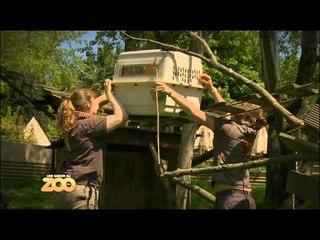 Une saison au zoo - Episode 33 (Saison 1)