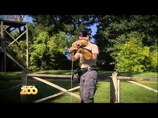 Une saison au zoo - Episode 41 (Saison 2)