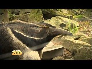Une saison au zoo - Episode 32 (Saison 2)
