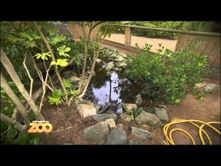 Une saison au zoo - Episode 30 (Saison 2)