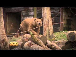 Une saison au zoo - Episode 19 (Saison 3)