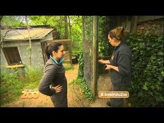 Une saison au zoo - Episode 28 (Saison 1)