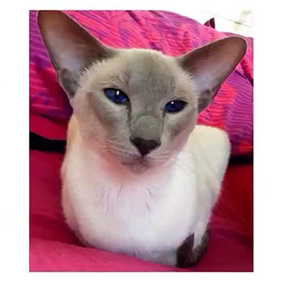 #cat #cats #catsagram #catstagram #instagood #kitten #kitty #kittens #pet #pets #animal #animals #