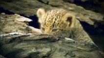 Animals Documentary ,Discovery Channel , Wildlife Animals , Amazonia Documentary Nat Geo WILD