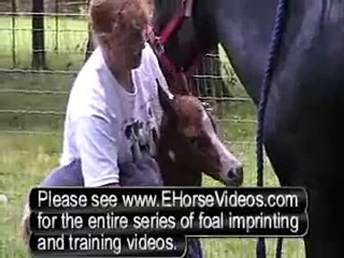 Horse Training Videos Preview Of Imprinting Your Foal Ehorsevideos Com Video Dailymotion