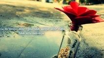 Kata-kata Mutiara Ungkapan Cinta Romantis, Kata Cinta Paling Romantis HD