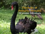 The Birds of Primarily Primates