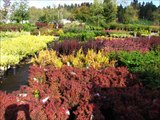 425-492-5000 landscaping bothell wa, landscaping lynnwood, landscaping snohomish wa