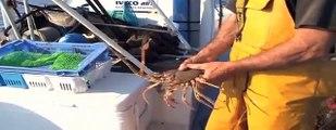 Le Casier : Une pêche responsable en Normandie