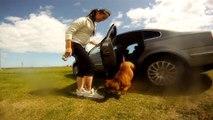 staffordshire bull terrier sunday fun day