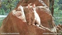 Helios the Cute Ginger Kitten Rock Climbing