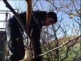 Tailleur agricole -une vidéo métier pôle emploi
