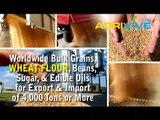 American Wholesale Bulk Wheat Flour, Bulk Wheat Flour, Bulk Wheat Flour, Bulk Wheat Flour, Bulk Wheat Flour, Bulk Wheat