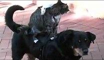 Il cane, il gatto e il topo