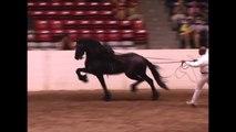 KFPS Friesian Stallion Mintse 384 Sport ~