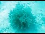 شجره تحت البحر تختفي باللمس شاهد بنفسكـ