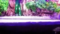 Décor aquarium pour tortues aquatiques/ Turtle tank handmade setup