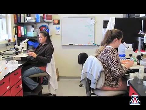 Dr. Johnny Fares: Mentoring Undergraduate Students