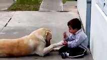 Dog tries to befriend the boy and the boy was denied.