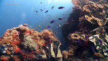 Easy Diving Visayas Safari Philippinen 2014/15