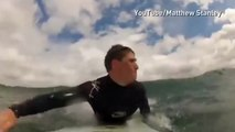 Cute baby seal joins surfers for a ride