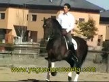 caballos de pura raza española, caballos, p.r.e.,