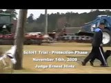 Rottweiler Schutzhund 1 Protection Phase - USA/SVF Judge Ernest Hintz