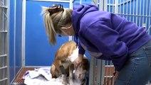 010613 DOG SHOT , TIED IN TRASH BAG TIED TO FENCE LEFT FOR DEAD