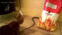 Cat vs Snake! TOP 10! Amazing Cat Attack & Kill Snake Compilation 2015!! Кот против змеи - ТОП 10!