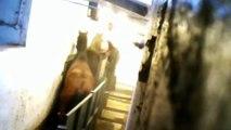 Speaking for the Animals - Hillside Animal Sanctuary Goes Undercover