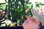 Galapagos Islands travel: Kathy's slideshow of Santa Cruz