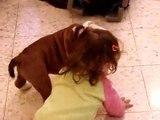 Zuta plays with Orin