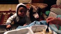 """Bébé ne dit pas """"maman"""" le chien lui le fait!"""
