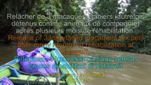 VIDEO: Relâcher de Macaques / Release of Macaques / Pelepasan Kera