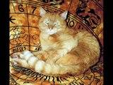 Heinrich, die schönste Katze der Welt, sagt auf wiedersehen!