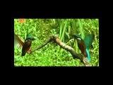Superhit Gazal | Wo Jo Tere Karib Baitha | Full HD Video | Balraj | GoBindas Punjabi Hits
